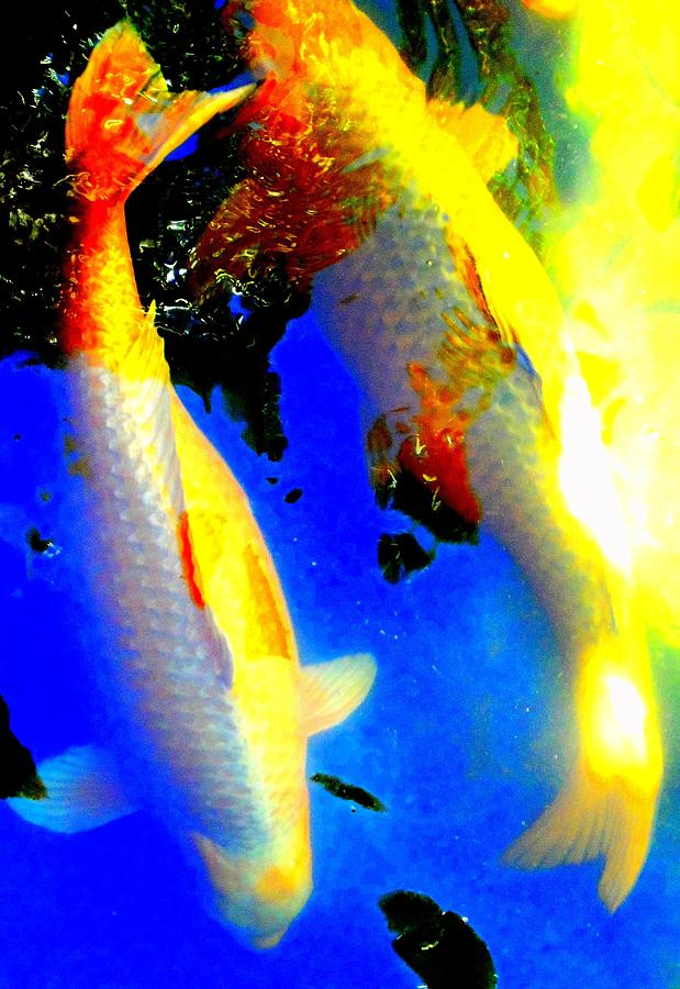 Koi Digital Art - Koi Story Two A by Randall Weidner