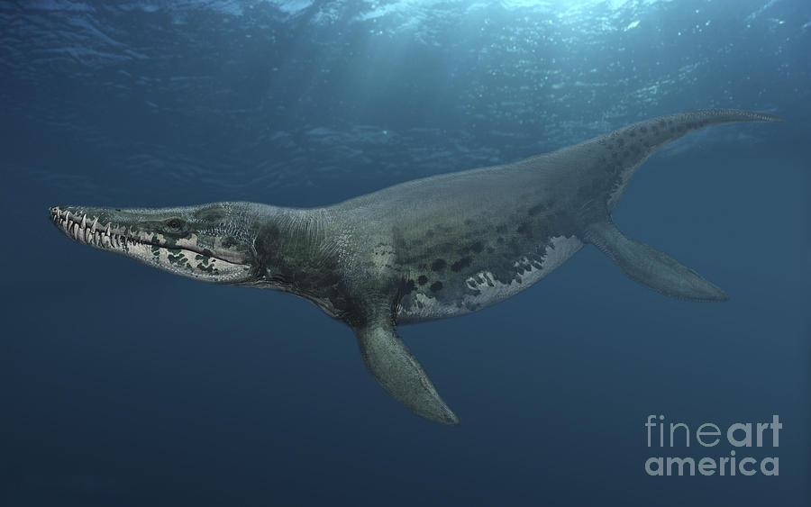 Kronosaurus Queenslandicus Swimming Digital Art By Sergey