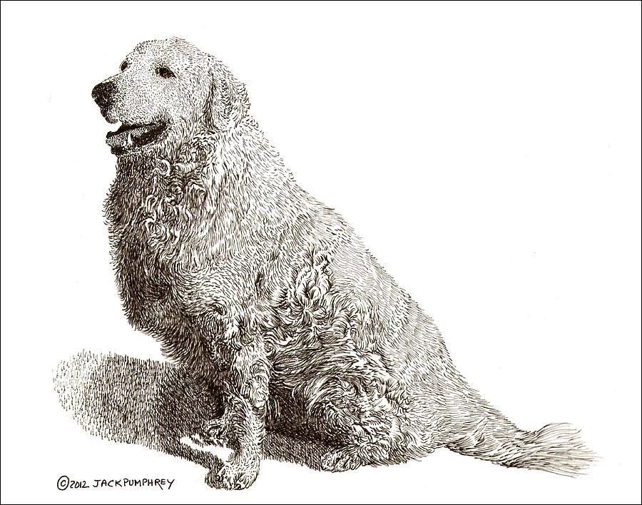 Pax Drawing - Kuvasz Named Pax by Jack Pumphrey