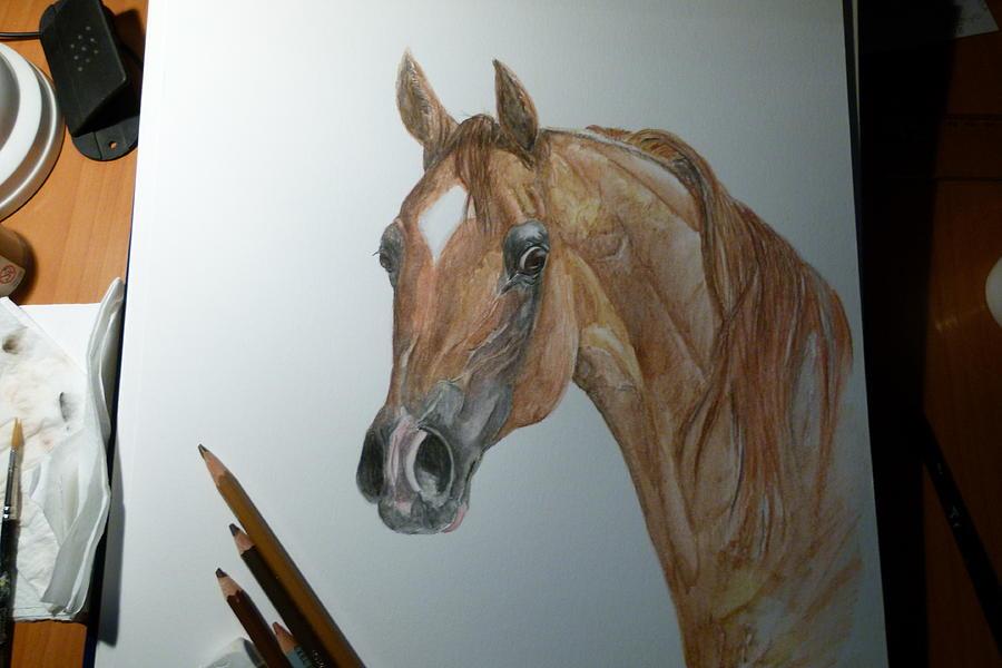 Arabian Horse Painting - Kwestura by Janina  Suuronen
