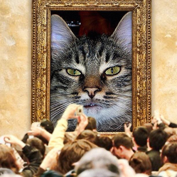 Pussy Photograph - La Mia Amica Vanitosa##cat #cats by Fausto Luigi Cima