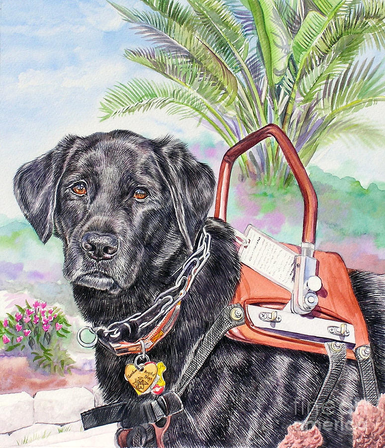 Labrador Retriever Service Dog By Gail Dolphin