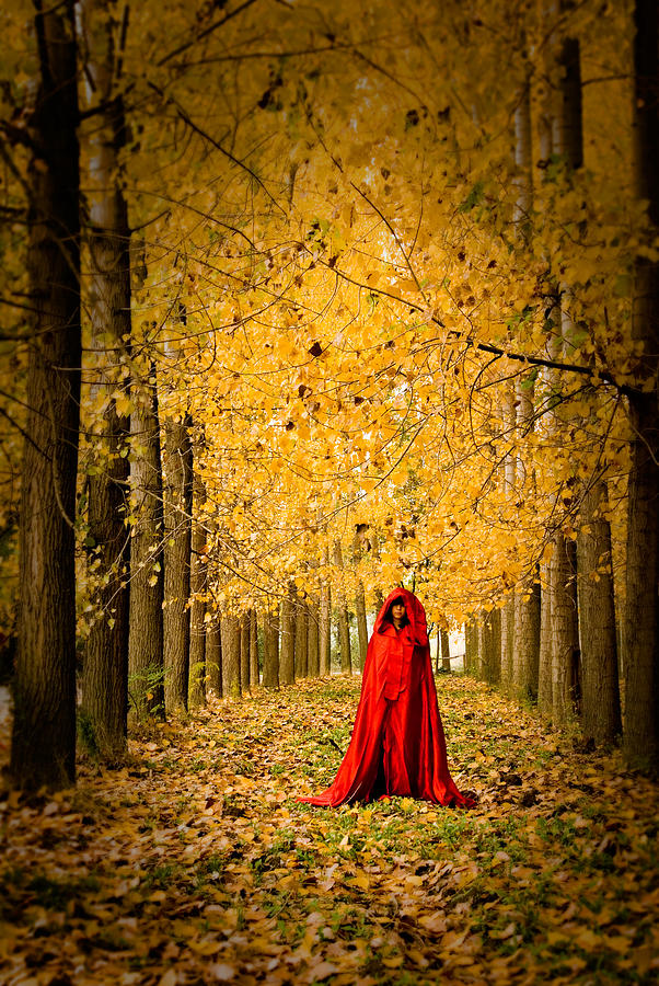 Trees Photograph - Lady In Red - 5 by Okan YILMAZ