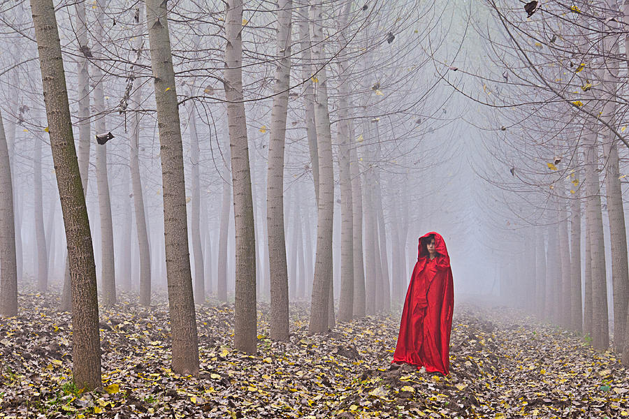 Trees Photograph - Lady In Red - 7 by Okan YILMAZ