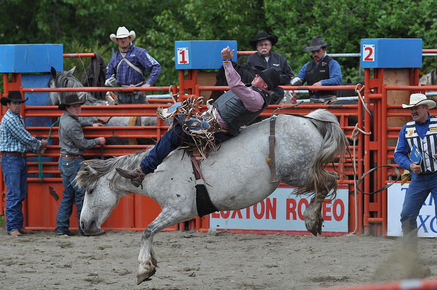 Rodeo Photograph - Laid Back by Malcolm  Chalmers