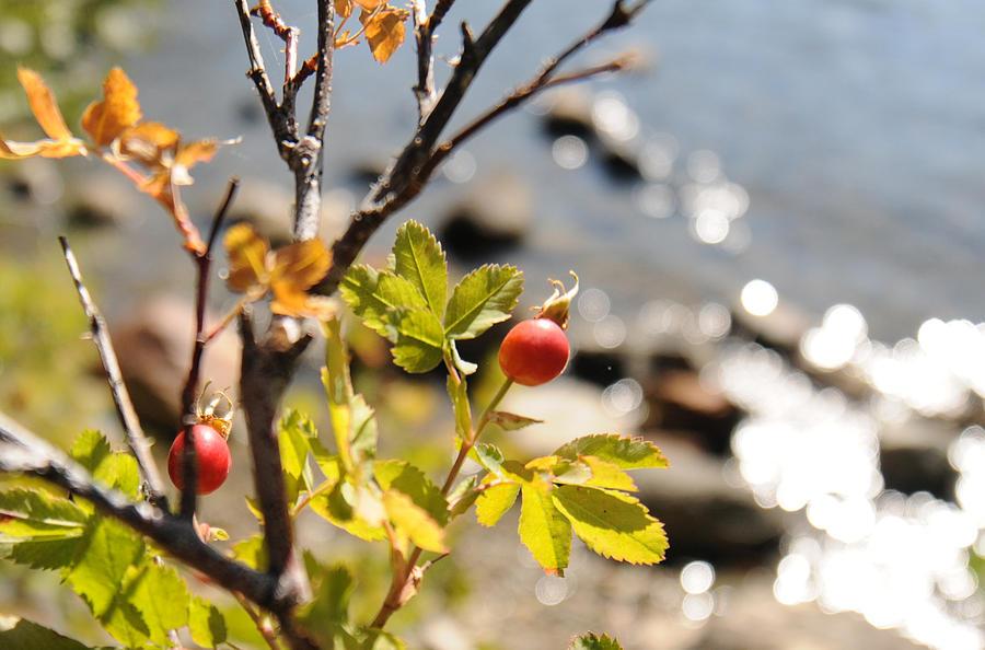 Lake Tahoe 06 by Earl Bowser