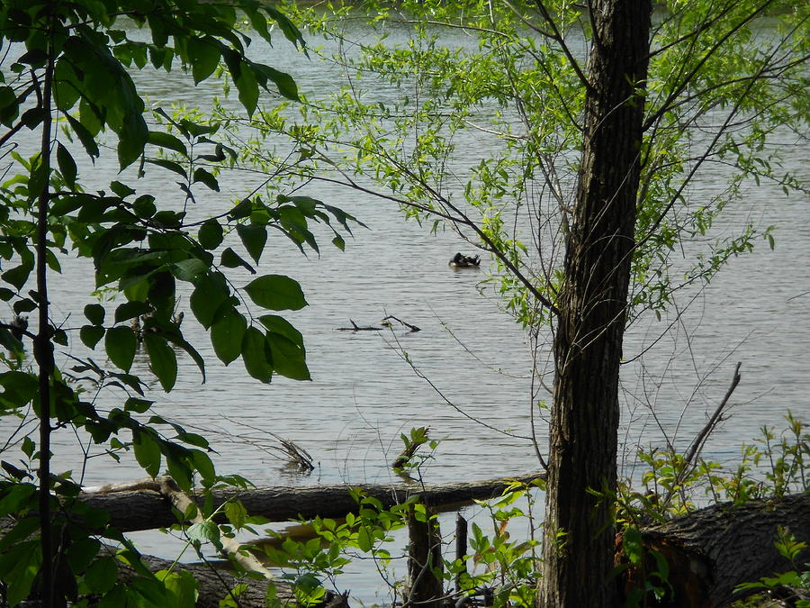 Duck Photograph - Lake View by Craig Keller