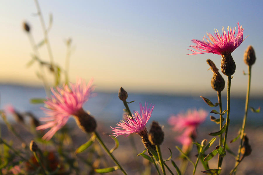 Hovind Photograph - Lakeside Flowers by Scott Hovind