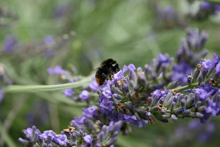 Landing Bee by Harri Spietz