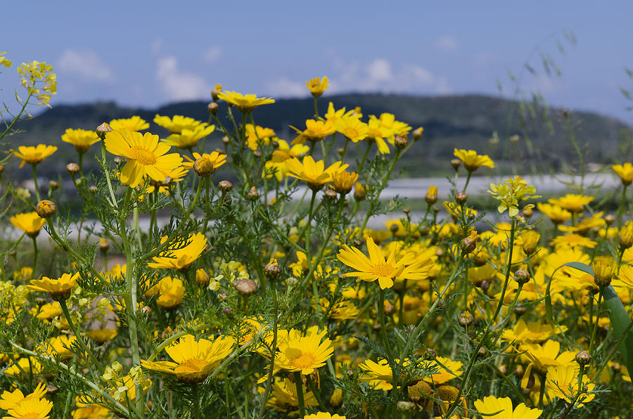 Background Photograph - Landscape with Wild Flowers by Michael Goyberg