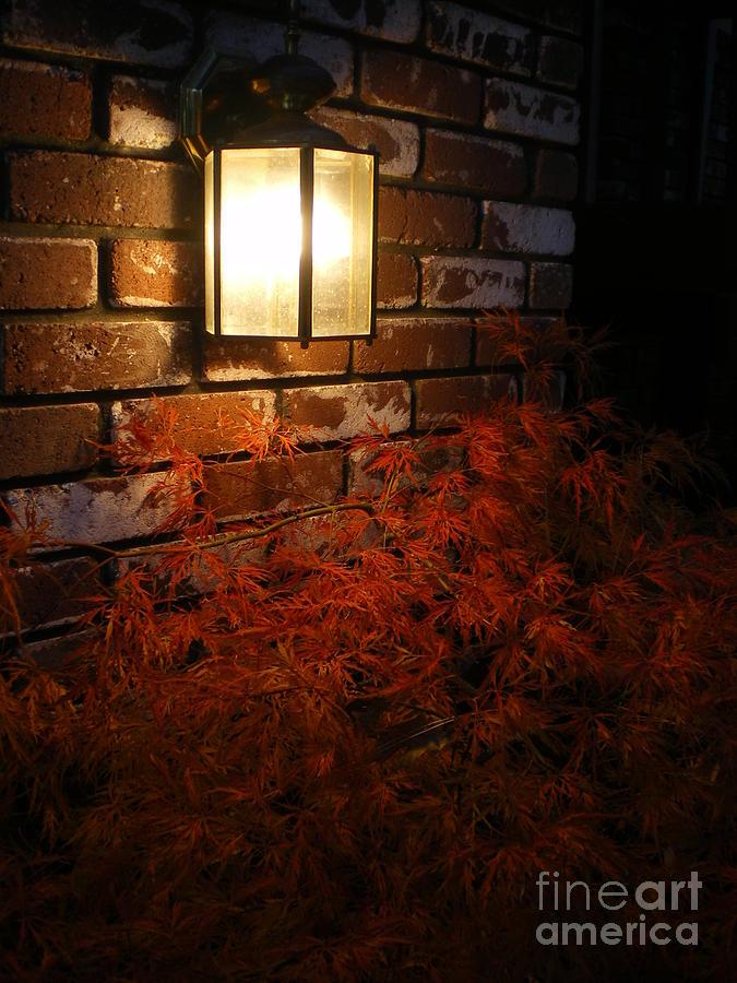 Lantern Photograph - Lantern Light Maple by Linda Battles