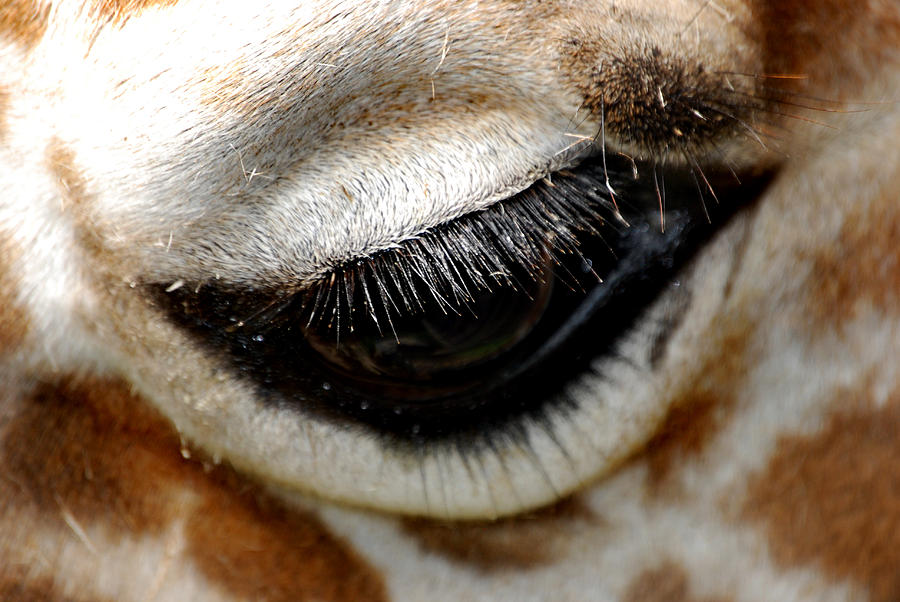 Eye Photograph - Lashes On The Eye by Skip Willits
