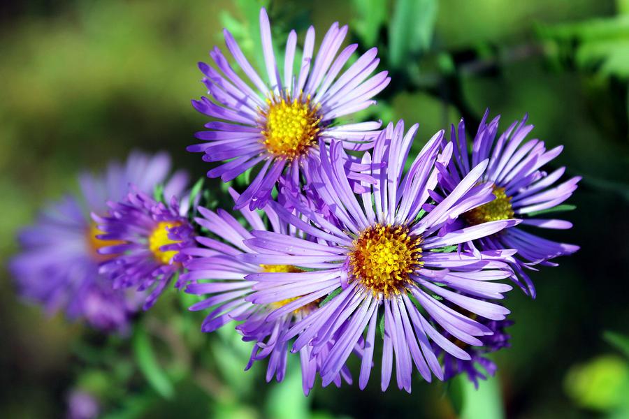 Macro Photograph - Last Bloom by Sheryl Burns