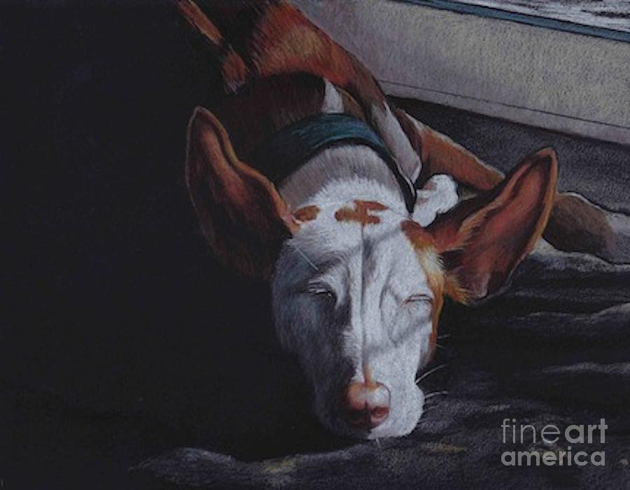 Ibizan Hound Drawing - Late Afternoon Nap by Charlotte Yealey