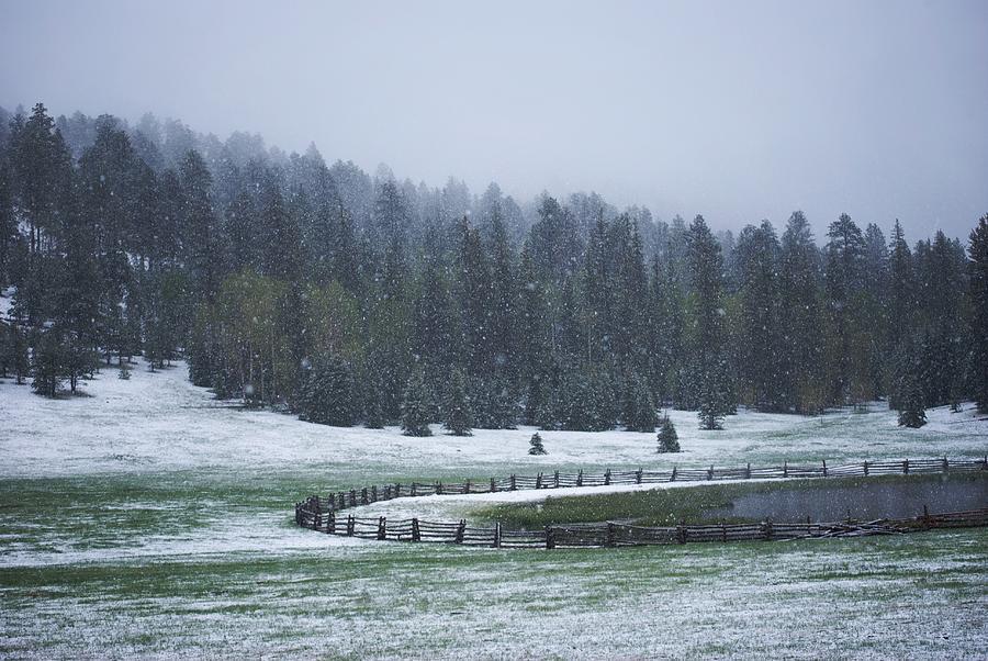 Background Photograph - Late Season Snowstorm by C Thomas Willard