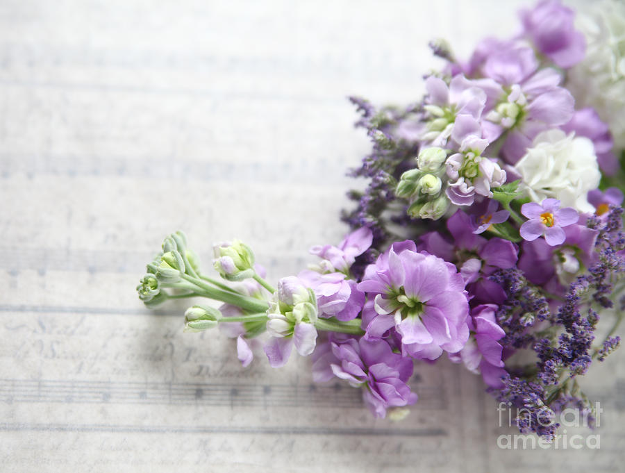 Lavender Colored Stock On A Music Background Photograph By Ruby