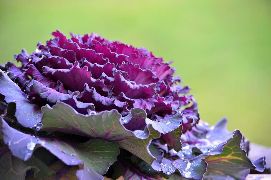 Plant Photograph - Layers Of Wet Beauty by Sandi OReilly