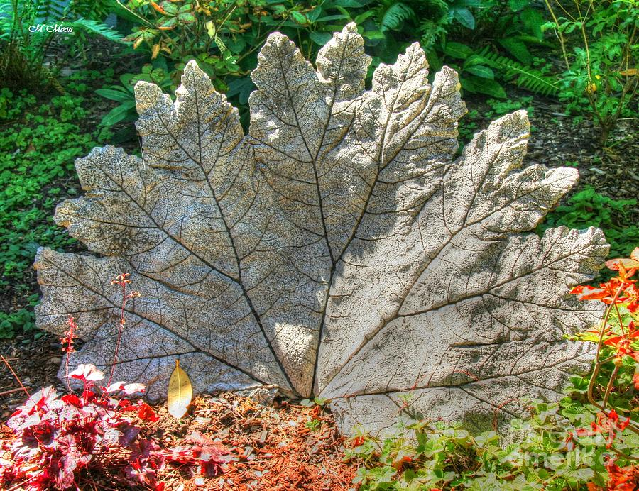 Leaf Photograph - Leaf Art by Tap On Photo