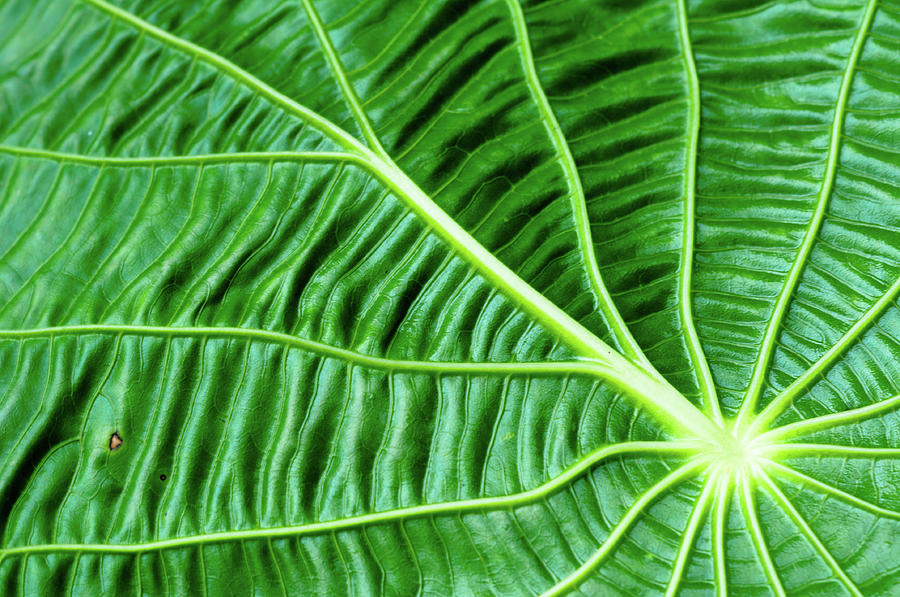 Horizontal Photograph - Leaf by by Jonathan Fife