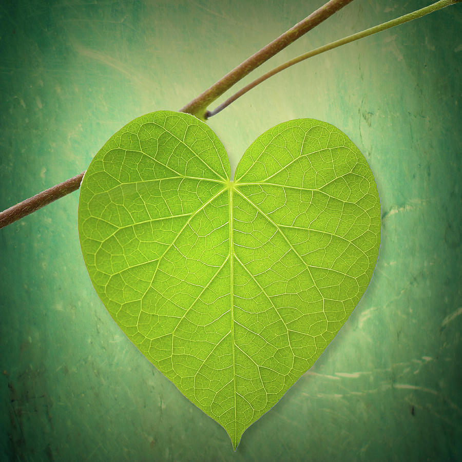 Image result for leaf heart
