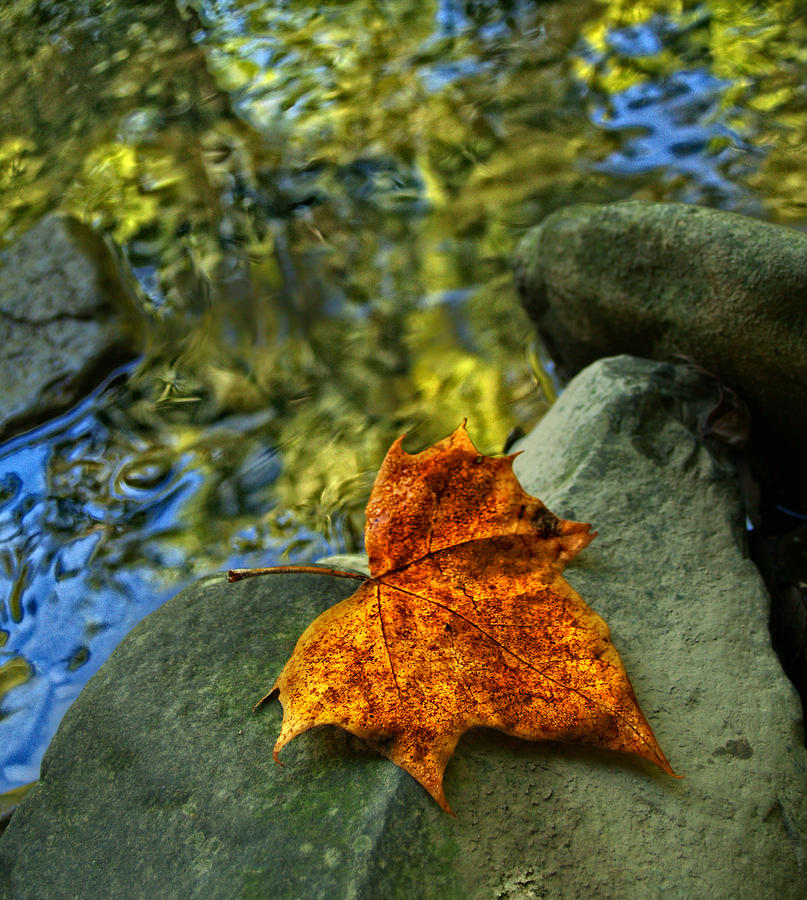 Leaves Photograph - Leaf on River Rock by Brian Mollenkopf