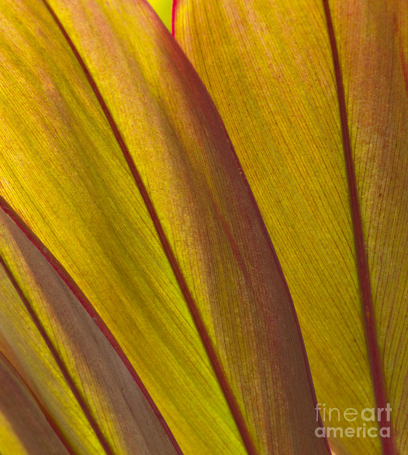 Bronstein Photograph - Leaf Patterns by Sandra Bronstein