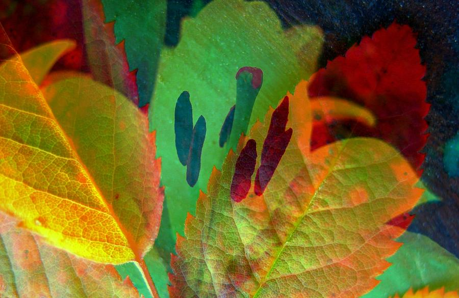 Autumn Photograph - Leaf Reflections by Shirley Sirois
