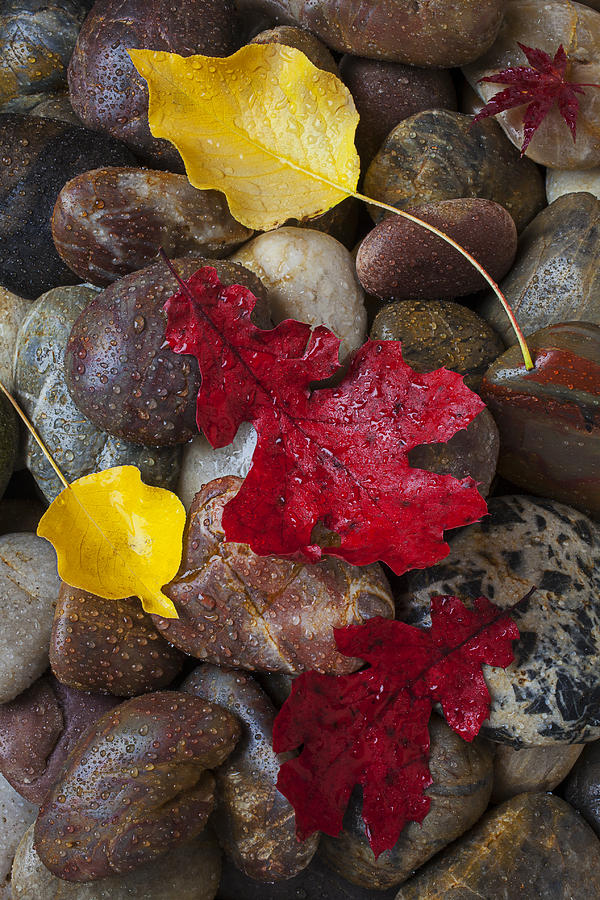 Red Photograph - Leafs And Stones by Garry Gay