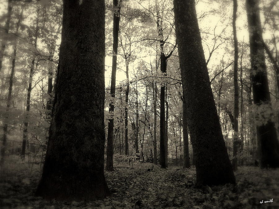 Trees Photograph - Lean Two by Ed Smith