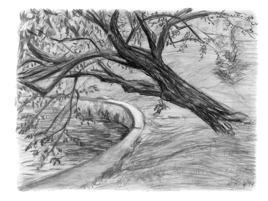 Charcoal Drawing - Leaning Tree by Adam Long