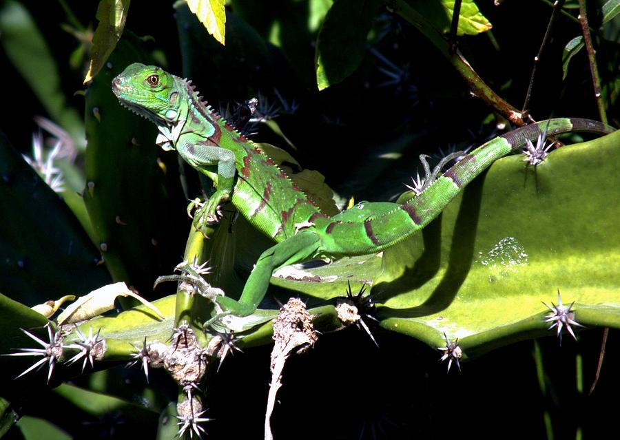 Lizards Photograph - Leapin Lizards by Karen Wiles