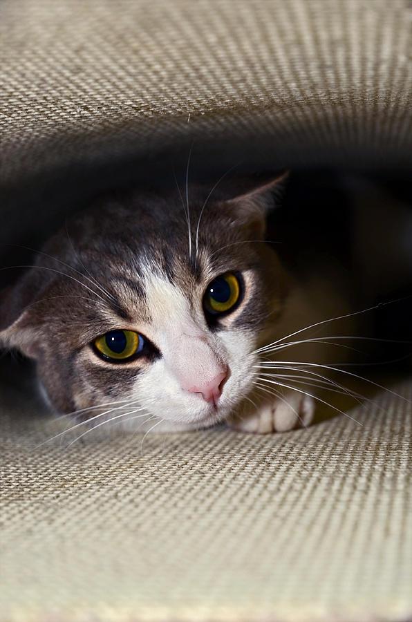 Cat Photograph - Leave Me Alone by Susan Leggett