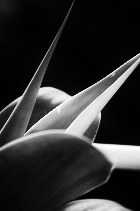 Pure Photograph - Leaves - Mono by Dickon Thompson