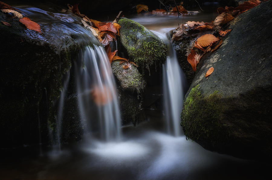 Autumn Photograph - Leaves Along Small Stream 1 by Steve Hurt
