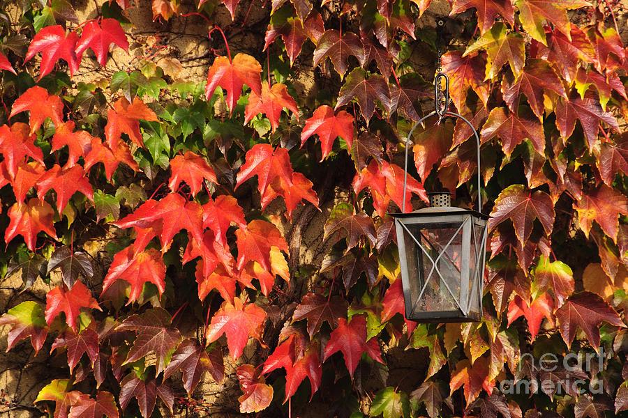 Autumn Photograph - Leaves And Lantern by Katja Zuske