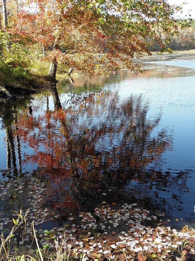 Leaves Photograph - Leaves Of Reflections by Kim Galluzzo Wozniak