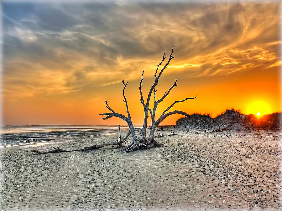 Folly Beach Photograph - Left Standing by Jenny Ellen Photography