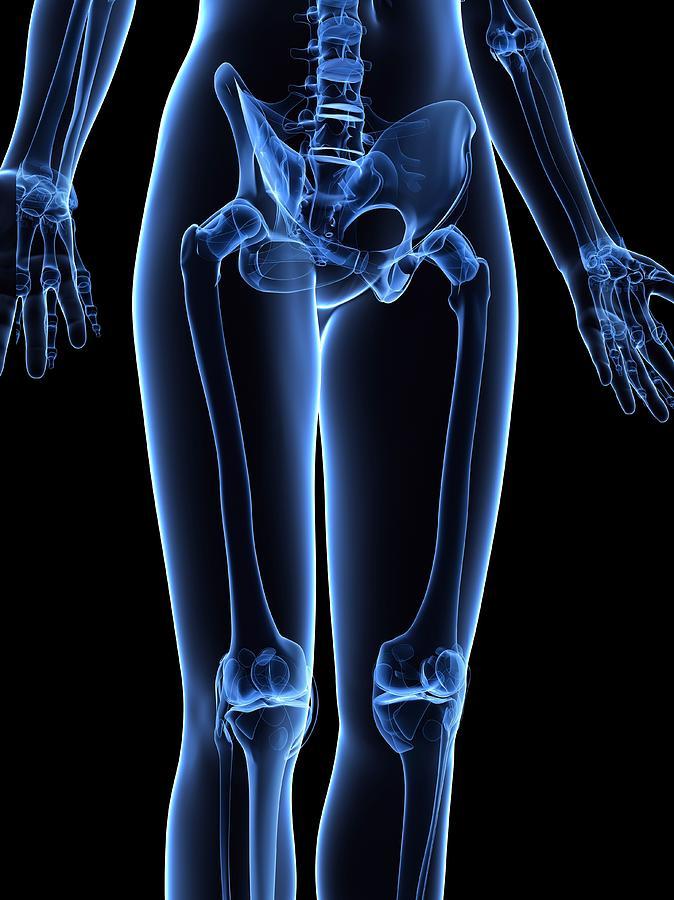 Leg Bones, Artwork Digital Art by Sciepro
