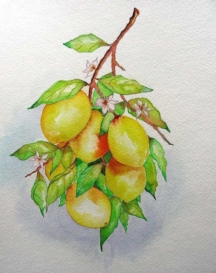Lemons Painting - Lemons by Elena Mahoney
