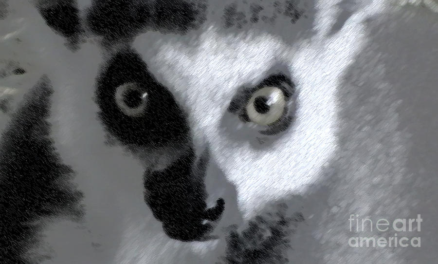 Nature Photograph - Lemur by John From CNY