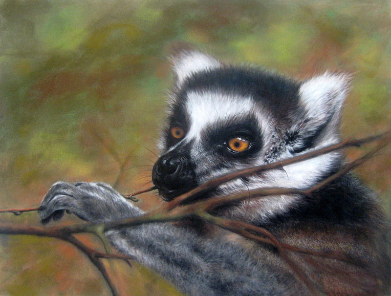 Wildlife Pastel - Lemur by Rose Baggs