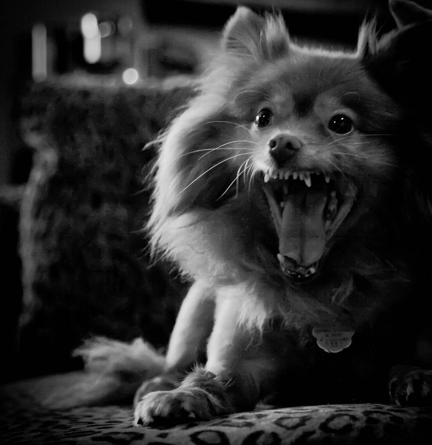 Dog Photograph - LEO by Heidi Horowitz