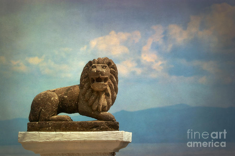 Lion Photograph - Leo On A Roof by Susan Isakson