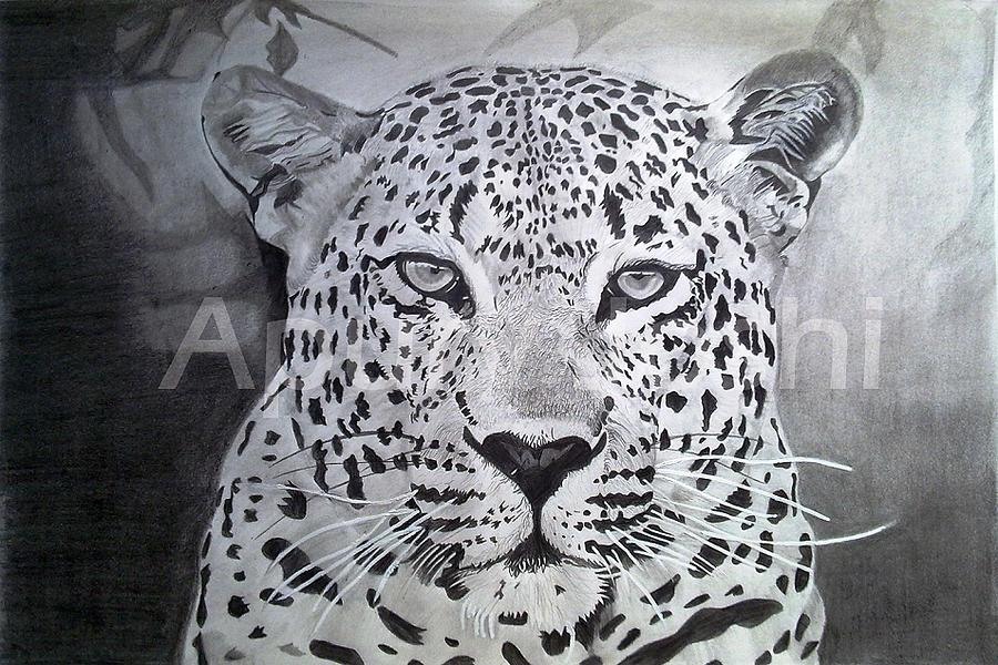 Leopard Drawing By Apurv Joshi