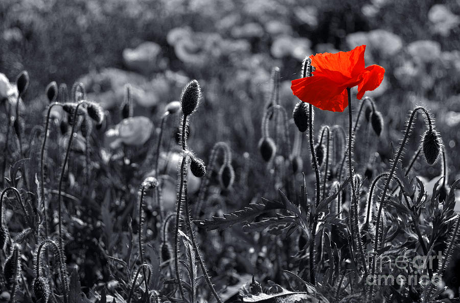 Lest We Forget Photograph By Serena Bowles