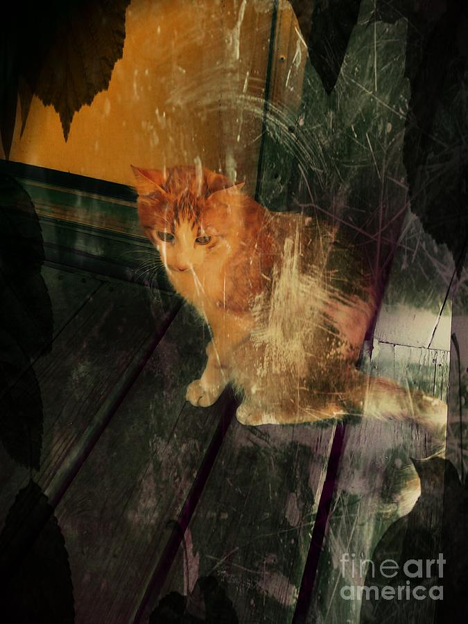 Halloween Photograph - Let Me In by Denisse Del Mar Guevara