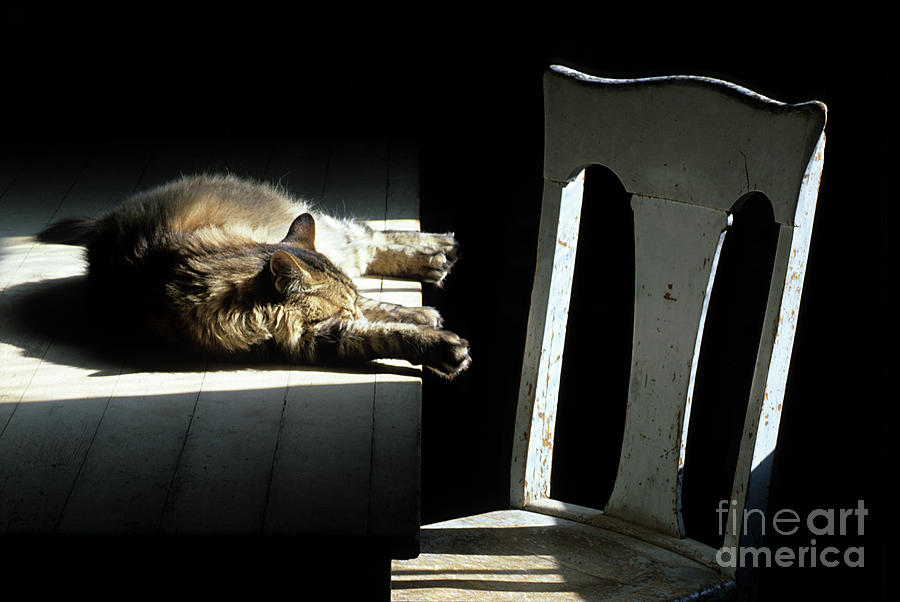Cat Photograph - Let Sleeping Cats Lie by Bob Christopher