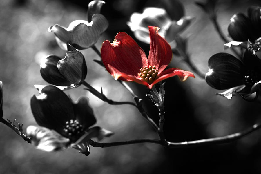Desaturated Photograph - Let There Be Color by Bonnie Bruno