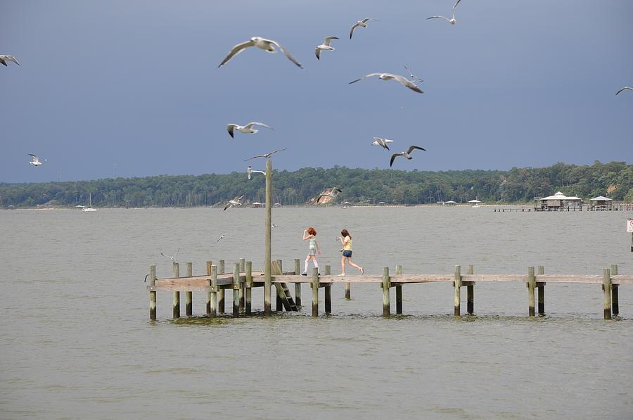 Gulf Photograph - Lets Go See The Birds by David Dittmann
