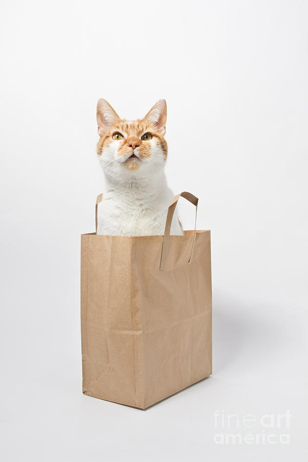 Letting The Cat Out Of The Bag Photograph by Catherine MacBride